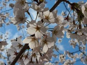 アズミノイロ《安曇野彩》 あわてんぼうの春が来る