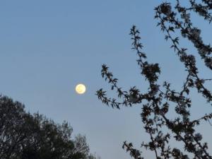 アズミノイロ《安曇野彩》 りんごのお花と満月と
